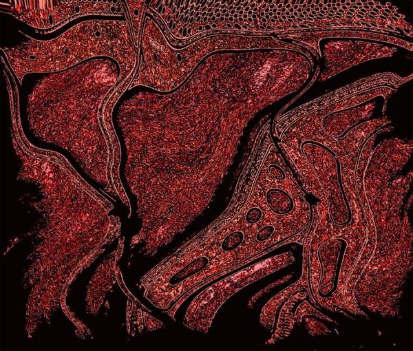 """""""Dragon"""" by Artist Emily Shane, 25.5"""" x 30"""""""