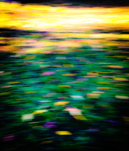 """""""Lilypad in Motion"""" by Emily Shane"""