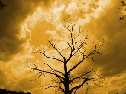 """Golden Tree"" by Emily Shane"